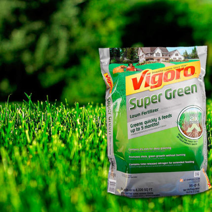 Vigoro Lawn Fertilizer